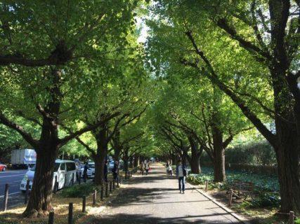 デートにオススメ。東京都心で見られる紅葉、イチョウ並木